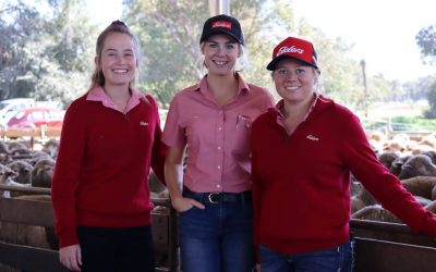 Lauren Rayner – Livestock and Wool Traineeship – Ex Student 2014 to 2016